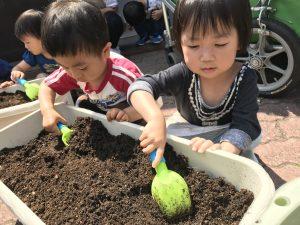 毎年、野菜を育てて食べる食育にも進んで取り組んでいます